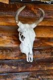 Рожок и череп коровы на древесине Стоковое Фото