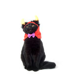 рожочки дьявола черного кота Стоковые Изображения RF