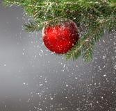 Рождественская елка покрытая с снегом и украшенная с красным шариком Стоковая Фотография RF
