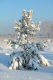 Рождественская елка покрытая с снежком Стоковое Фото
