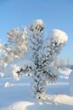 Рождественская елка покрытая с снежком Стоковые Изображения RF