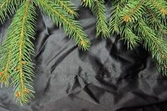 рождественская елка предпосылки черная Стоковое фото RF