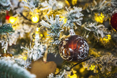 Рождественская елка с белым заморозком на штырях Стоковое Изображение RF
