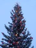 Рождественская елка с накаляя гирляндой и звездой стоковые фотографии rf