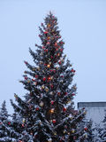 Рождественская елка с накаляя гирляндой и звездой стоковое изображение