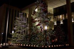 Рождественские елки Стоковое фото RF