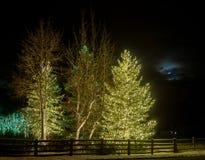 Рождественские елки в лунном свете стоковое фото rf