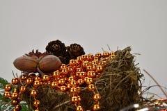 рождество веселое Гнездо с гайками и конусами сосны Стоковые Фотографии RF