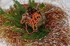 рождество веселое Елевая ветвь с гнездом, гайками и конусами сосны Стоковые Фотографии RF