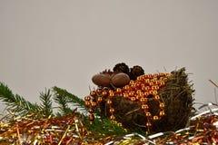 рождество веселое Елевая ветвь с гнездом, гайками и конусами сосны Серая предпосылка Стоковая Фотография RF