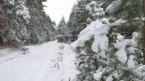 Рождество ветви дерева в снеге в ландшафте природы леса зимы ветра отбрасывая Стоковые Фотографии RF