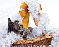 Рождество играя кота Стоковая Фотография RF