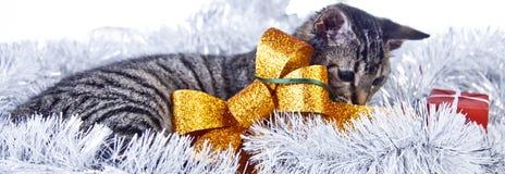 Рождество играя кота Стоковое фото RF