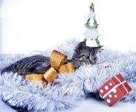 Рождество играя кота Стоковое Изображение RF