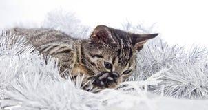 Рождество играя кота Стоковое Изображение
