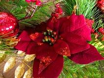 Рождество красного цвета Poinsettia Стоковое фото RF