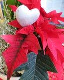 Рождество Роза с сердцем Стоковая Фотография RF