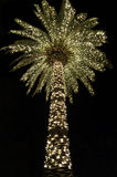 Рождество Palmetto Стоковые Фото