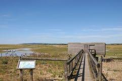 рож природных ресурс ресурсов гавани Стоковая Фотография RF