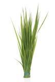 рож травы стоковая фотография