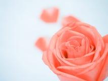 Роза апельсина на свете - голубой предпосылке Стоковое фото RF