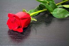 Роза всегда будет угождать сердцу женщины Стоковые Фото