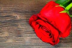 Роза всегда будет угождать сердцу женщины Стоковые Изображения RF