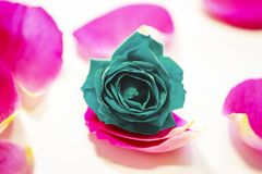 Роза голубого зеленого цвета и розовые лепестки на белой предпосылке стоковые изображения