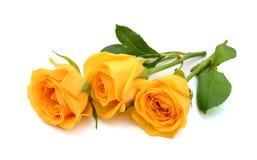 Роза желтого цвета в изолированной белизне Стоковая Фотография RF