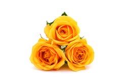 Роза желтого цвета в изолированной белизне Стоковое Фото