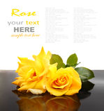 Роза желтого цвета Стоковое Изображение RF