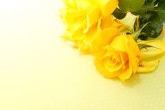 Роза желтого цвета Стоковая Фотография