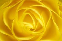 Роза желтого цвета Стоковые Изображения