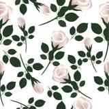 роза картины безшовная Стоковые Фотографии RF