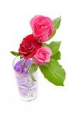 Роза красного цвета и пинка в стекле Стоковая Фотография