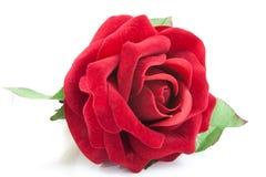 Роза красного цвета на белизне Стоковые Изображения