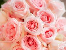 Роза пинка в wedding абстрактная предпосылка Стоковые Фото