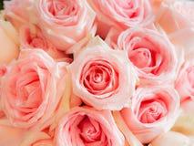 Роза пинка в wedding абстрактная предпосылка Стоковое Фото