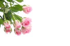 Роза пинка и предпосылка отражения стоковые изображения rf