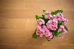 Роза пинка на деревянной предпосылке Стоковые Фотографии RF
