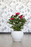 Роза пинка на керамическом баке в комнате Стоковое фото RF
