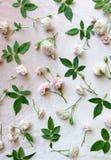 Роза пинка на розовой предпосылке бархата Стоковая Фотография RF