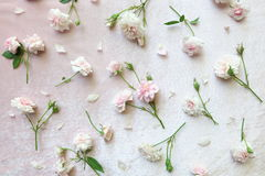 Роза пинка на розовой предпосылке бархата Стоковое Изображение RF