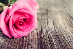 Роза пинка на серой деревянной предпосылке Стоковые Изображения RF