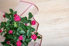 Роза пинка отпочковывается крупный план на предпосылке листьев Стоковая Фотография RF