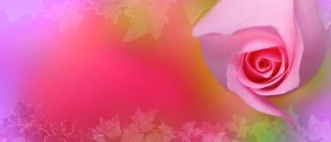 Роза пинка с предпосылкой плюща стоковое изображение