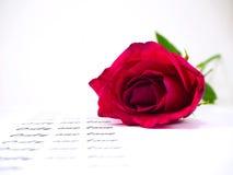 Роза пинка с текстом на белой предпосылке, стоковые фотографии rf