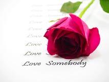 Роза пинка с текстом на белой предпосылке стоковые фотографии rf