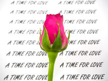 Роза пинка с текстом на белой предпосылке Стоковые Фото
