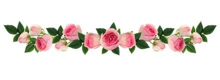 Роза пинка цветет и отпочковывается линия расположение Стоковое фото RF